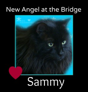 Rest in peace dear Sammy