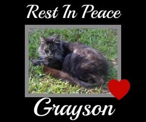 Rest In Peace Sweet Grayson