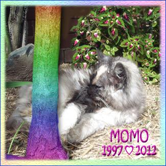Rest In Peace Dear Sweet MoMo