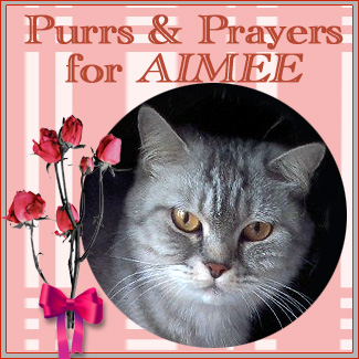 Purrs for Aimee
