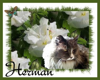 Run Free Dear Herman