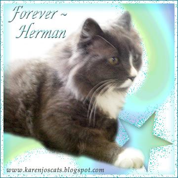 Forever Herman