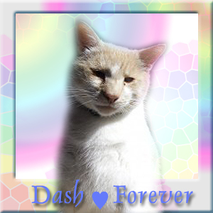 We will love you forever Dash
