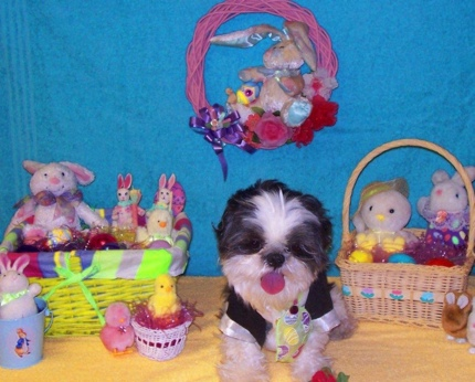 Happy Easter from Bailey