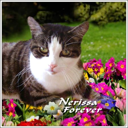 Nerissa,Forever