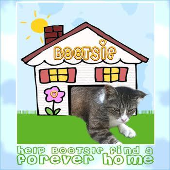 Adopt Bootsie
