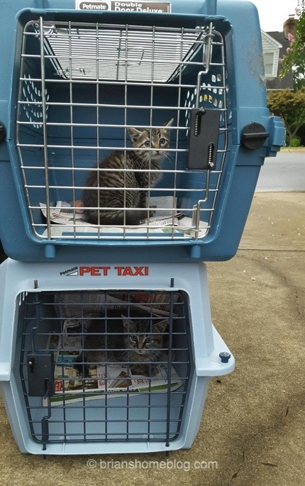 Brian's Home. Adopt cats, we deserve it!