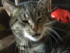 End Stank Face with Tidy Cats TidyLock