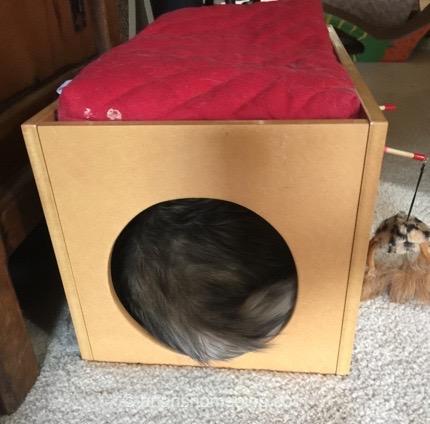 Remember, adopt cats, we deserve it!!!!! More Forever Homes More Often! Purrrrr! Zip! Later!