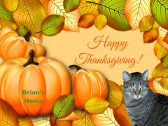 Thankful Thursday Blog Hop. Brian's Home, adopt cats, we deserve it!
