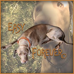 easy-forever