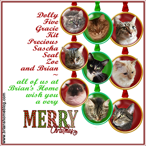 Merry Christmas from Brian's Home.  Remember, adopt cats, we deserve it!!!!! More Forever Homes More Often! Purrrrr! Zip! Later!