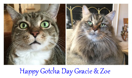 Happy Gotcha Day Gracie and Zoe! Brian's Home, adopt cats, we deserve it!