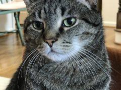 Thankful Thursday Blog Hop Brian's Home, adopt cats, we deserve it!