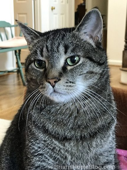 Thankful Thursday Blog Hop Brian's Home, adopt cats, we deserve it!