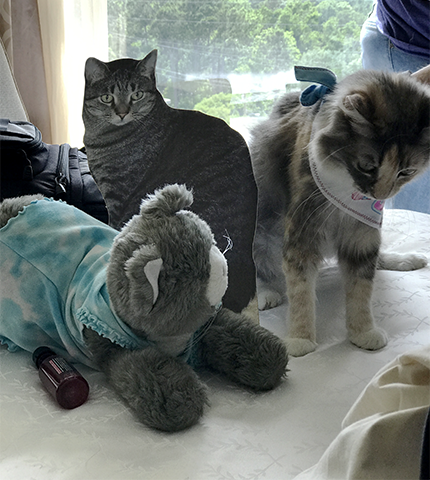 BlogPaws 2017 CK, Flat Brian and Sophie