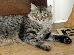 Tabby Tuesday with Simon - Brian's Home, adopt cats, we deserve it!