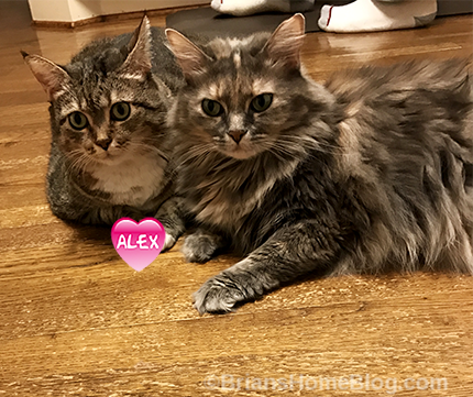 T.G.I.F. with Gracie and Dolly - Brian's Home, adopt cats, we deserve it!