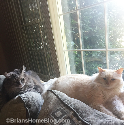 T.G.I.F. Brian's Home, adopt cats, we deserve it!