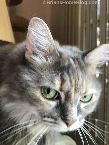 Womancat Wednesday Brian's Home, adopt cats, we deserve it!