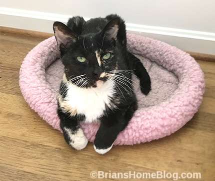 Womancat Wednesday- Brian's Home, adopt cats, we deserve it!