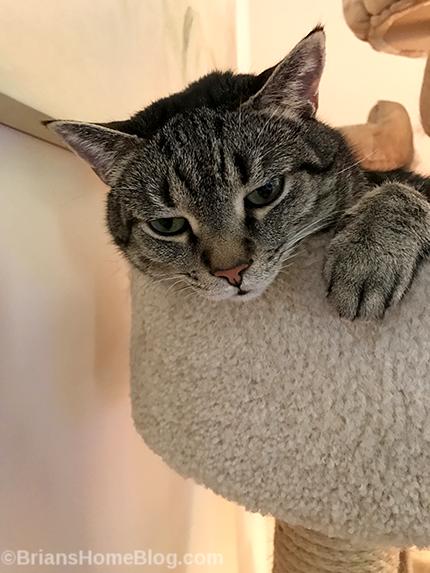 mancat monday - Brian's Home, adopt cats, we deserve it!
