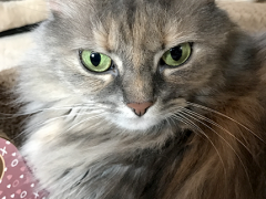 womancat wednesday whisker humps with Dolly - Brian's Home, adopt cats, we deserve it!