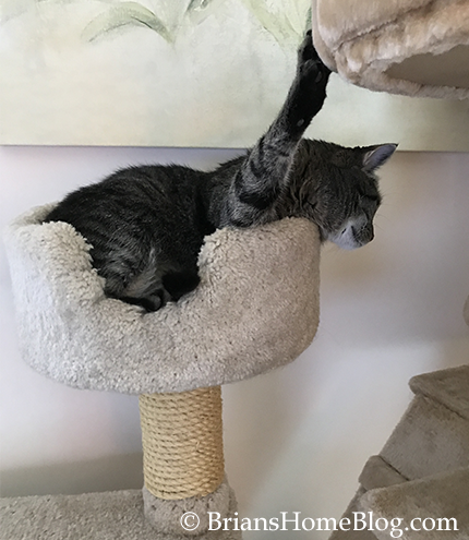 easy brian - Brian's Home, adopt cats, we deserve it!