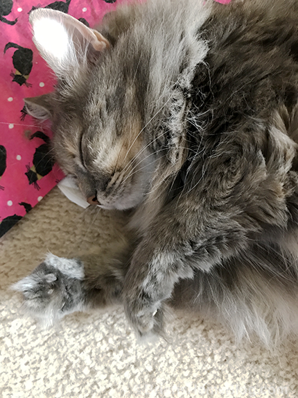 easy dolly - Brian's Home, adopt cats, we deserve it!