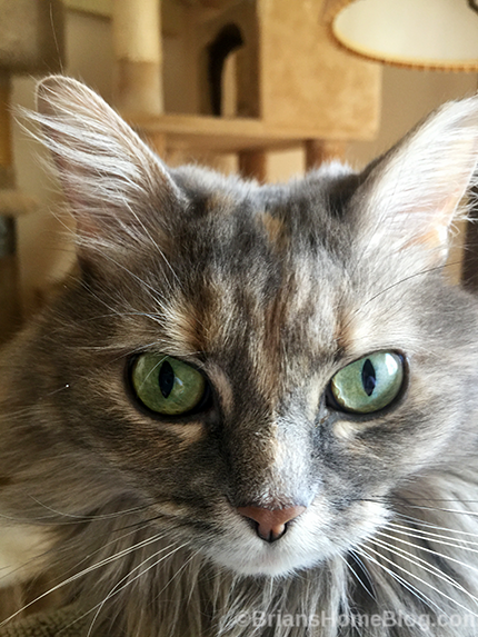 selfie dolly - Brian's Home, adopt cats, we deserve it!