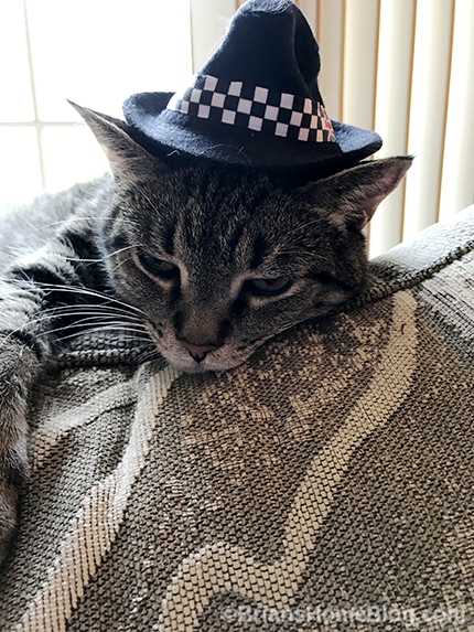 Thankful Thursday Blog Hop Brian's Fedora - Brian's Home, adopt cats, we deserve it!