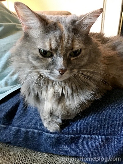 womancat wednesday wordless with sister dolly - Brian's Home, adopt cats, we deserve it!