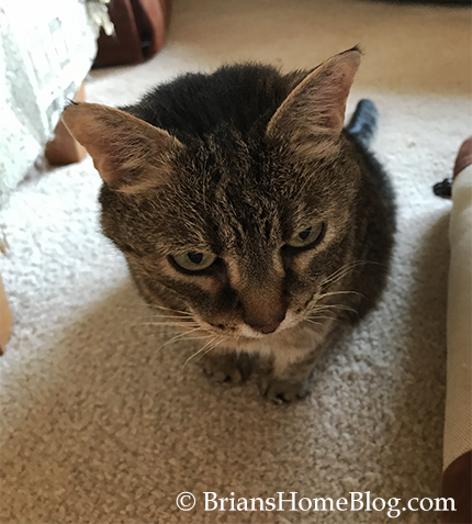 womancat wednesday whisker humps kit - Brian's Home, adopt cats, we deserve it!