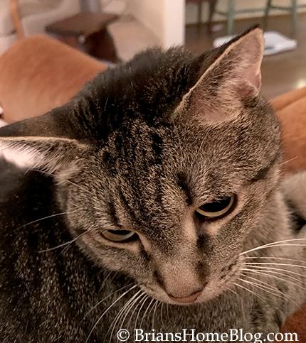 mancat monday brian 08212017 - Brian's Home, adopt cats, we deserve it!