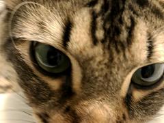 simon selfie - Brian's Home, adopt cats, we deserve it!