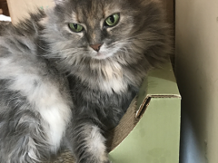 womancat wednesday whisker humps dolly 08232017 - Brian's Home, adopt cats, we deserve it!