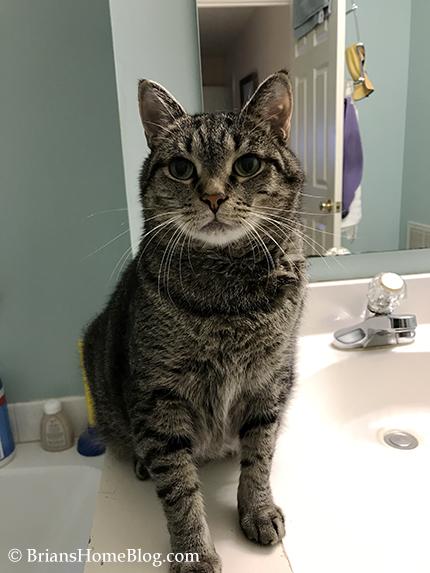 mancat monday brian - Brian's Home, adopt cats, we deserve it!