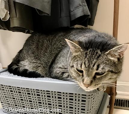 mancat monday brian 09252017 - Brian's Home, adopt cats, we deserve it!