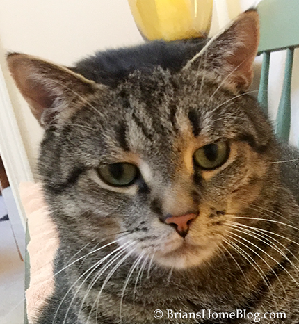 sunday selfie brian 0910017 - Brian's Home, adopt cats, we deserve it!