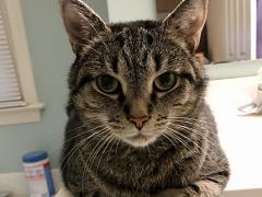 thankful thursday blog hop brian - Remember, adopt cats, we deserve it!!!!! More Forever Homes More Often! Purrrrr! Zip! Later!