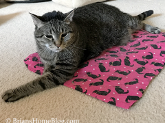 Thaop kful Thursday Blog Hop - Brian's Home, adopt cats, we deserve it!