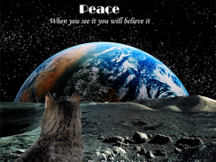 #Blog4Peace 2017 - Remember, adopt cats, we deserve it!!!!! More Forever Homes More Often! Purrrrr! Zip! Later!