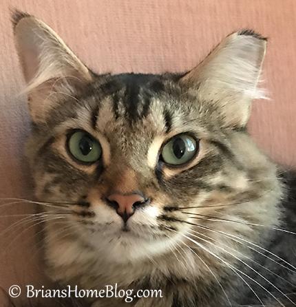 simon selfie 10082017 - Brian's Home, adopt cats, we deserve it!