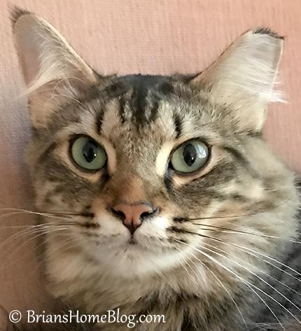 sunday selfie simon 10292017 - Brian's Home, adopt cats, we deserve it!