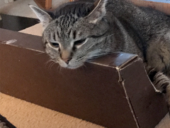 thankful thursday blog hop brian - Brian's Home, adopt cats, we deserve it!