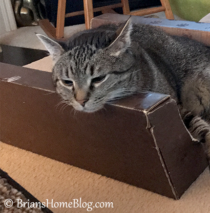 thankful thursday blog hop brian - Brian's Home, adopt cats, we deserve it!