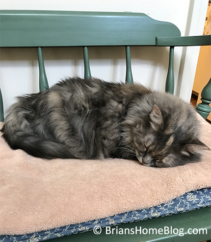 easy dolly 11192017 - Brian's Home, adopt cats, we deserve it!