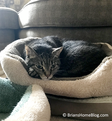 mancat monday brian 11202017 - Brian's Home, adopt cats, we deserve it!