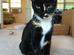 sister saturday precioius 12022017 - Brian's Home, adopt cats, we deserve it!