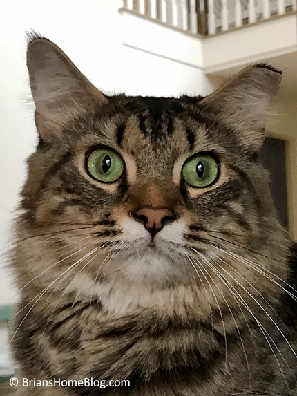 simon selfie 12032017 - Brian's Home, adopt cats, we deserve it!